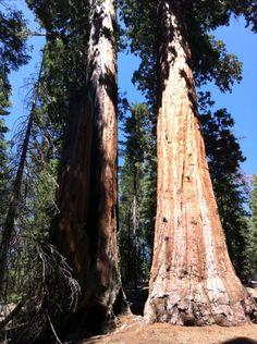 Kings Canyon National Park à Sierra, CA