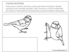 Ptáčci na krmítku, pracovní listy pro děti, pracovní list: ptáčci v zimě, sýkora modřinka, pozorování zvířat. Ecards, Memes, Winter, E Cards, Winter Time, Meme, Winter Fashion