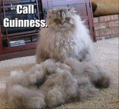 funny cat fur