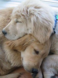 foreverasongbird: Agora eu sinto falta dos meus cães !!!