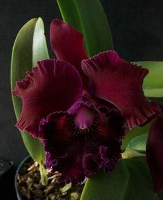 facebook - orchids
