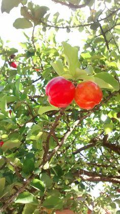 Jaguariúna - Sp Fruit