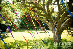 ribbons on trees