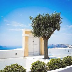 Door to heaven .... At Santorini island (Σαντορίνη) . Amazing colors & impressive Firostefani village at the background . An olive tree , blue sky , blue sea and big heart ... That's Greece ❤️!