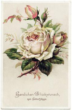 Old Design Shop ~ free digital image: vintage rose postcard