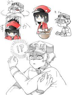 Hataraku Saibou (Cells at Work! Cute Comics, Funny Comics, Noragami, Kuroko, Memes Pt, Haikyuu, Blood Anime, Tamako Love Story, Anime City