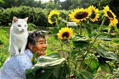 おばあちゃんと猫の愛らしいストーリー。心温まる、みさおとふくまる ? Grandmother and Her Cat -