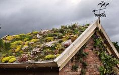 Green Roof, UK, Flickr #greenroofs