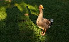 búcsúhétvége1 Kangaroo, Bird, Pets, Animals, Baby Bjorn, Animales, Animaux, Birds, Animal Memes