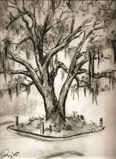 2005 - Live Oak in Tallahassee