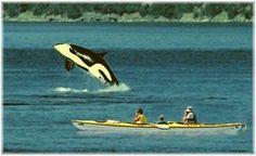 San Juan Islands Kayaking Trips & Kayaking Tour Itineraries