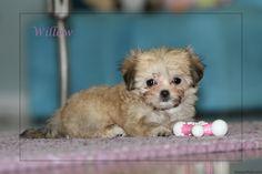 Media Library ‹ Always Adorable Mi-Kis — WordPress Wordpress, Puppies, Ideas, Puppys, Thoughts, Newborn Puppies, Pup, Cubs, Doggies