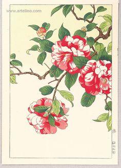 Hodo Nishimura active 1930s - Camellia