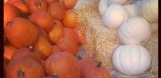 Brace yourself...Everything Pumpkin – 19 Paleo Pumpkin Recipes! I FREAKIN' LOVE PUMPKIN!!!!