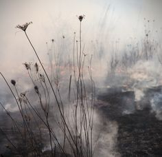 Burn No. 79 by Jane Fulton Alt