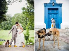 Some Great Photos of Animals at Weddings