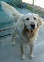 Cowboy is a handsome young man. He is 4-5 years old and is need of a good home. hw+