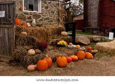Wegmeyer Farms in Autumn, Heirloom Pumpkins