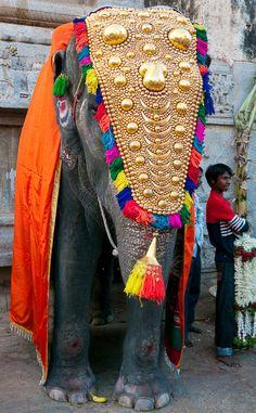 Asian-Elephant -festival