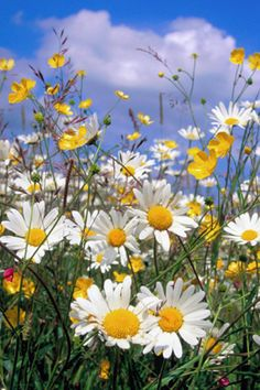 Daisies are a breath of fresh air :) And sweet buttercups....how I love buttercups and daisies...