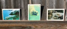 Polar Bear Blank Note Cards Assorted Set of 12 by HBBeanstalk, $30.00