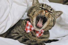 Handmade bowties for cats