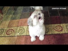 Distraction: Dog yells at owners - YouTube
