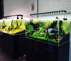 90'Scape and 120cm planted Aquarium of Aquaflora showroom  #FAAO #Aquaflora #Aquascaping by faaoaquascaping