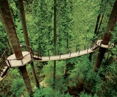 Exciting Things to Do in Vancouver | Capilano Suspension Bridge Park