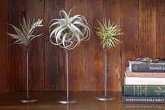 Web Shop - Flora Grubb Gardens