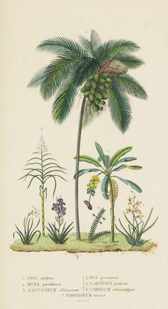 Joseph Drapiez, Dictionnaire classique des sciences naturelles, 1853. Brussels. Engraver: Desmares. Via Biodiversity Library