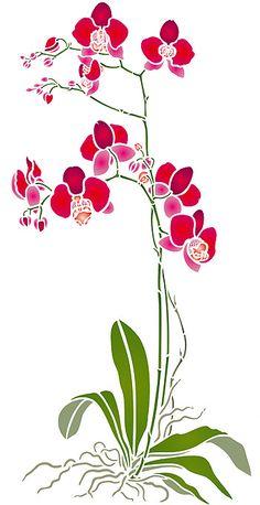 Orchidées Stencil. Phalaenopsis Stencil