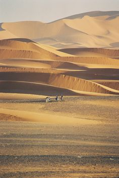 Sahara desert*