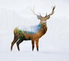 Deer 1 by Mark Ashkenazi