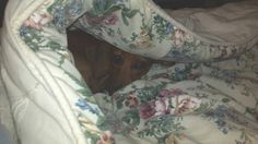 He loves to burrow