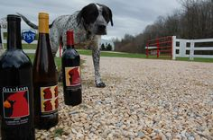 Gracie @ Cardinal Point Winery Monticello Wine Trail, Virginia Wineries, Wine Subscription, Fine Wine, Wines, Red Wine, Dog Lovers, Alcoholic Drinks, Puppies
