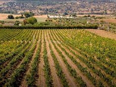 Andalucia, Vineyard, Spain, Outdoor, Outdoors, Vine Yard, Sevilla Spain, Vineyard Vines, Outdoor Games