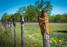 Fence posts topped with cowboy boots in the Texas Hill Country ...