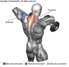 mappa-muscoli-trapezio-tirate-mento-manubri.jpg (390×380)