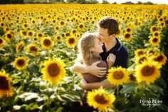 sunflower engagement photos - - Yahoo Image Search Results