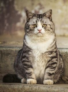 I don't even know what's going on with this cat's genetics, except that it all leads to AWESOME