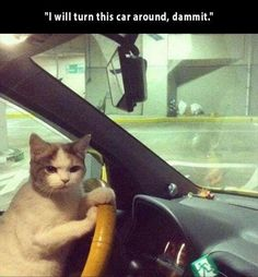 Monday Funny animals captions (08:07:34 AM, Monday 10, October 2016 PDT) – 25 pics | Follow @gwylio0148 or visit http://gwyl.io/ for more diy/kids/pets videos