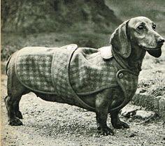 vintage dachshund do