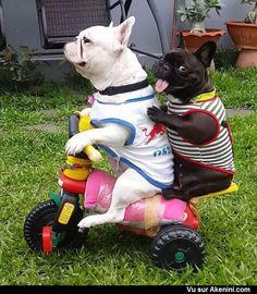 Akenini.com - Humour Animaux - Funny Hilarious Cute Animals
