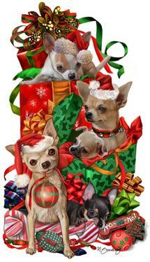 Chihuahua Christmas Holiday Cards are 8 x 5 and come in packages of 12 cards. One design per package. All designs include envelopes, your personal message, and choice of greeting. Christmas Animals, Christmas Dog, Vintage Christmas, Christmas Holidays, Merry Christmas, Christmas Quotes, Akita Dog, Chihuahua Art, Christmas Pictures