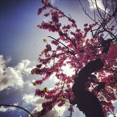 Spring - Palermo - Sicily