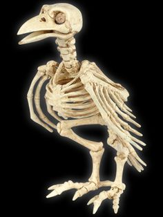 Crazy Bonez Skeleton Crow. Halloween: Beware the Birds! Black & White Theme Poe & Hitchcock Party Decorations & Ideas