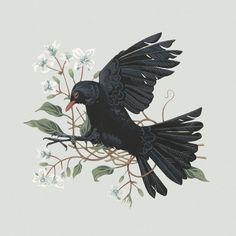 Blackbird2_Charlotte_Day_Illustration.jpg