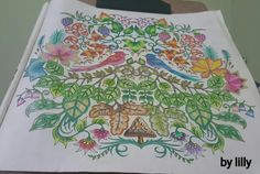 Floresta encantada pássaros