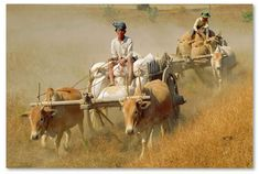 ind, view & price stock photos & videos of Travel, Cultures, Nature, Wildlife & the Environment. Farm Photography, Indian Photography, Village Photography, Watercolor Landscape, Watercolor Art, Bullock Cart, Body Painting Festival, Village Photos, Human Body Parts
